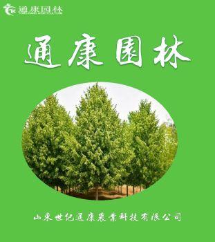 山东滕州通康园林精品苗木推介手册
