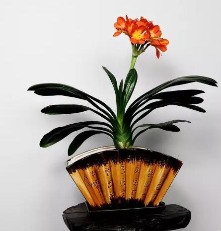 植物大家 电子书制作软件