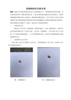 探秘蚂蚁的识路本领-外语实验小学吕嘉玮电子画册