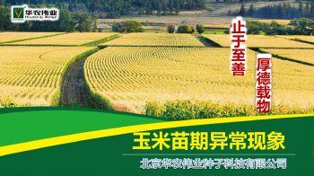 玉米苗期异常现象分析