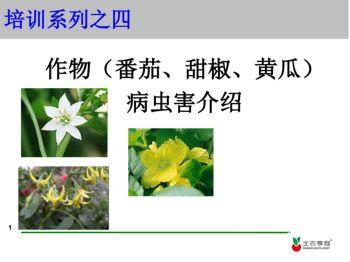 蔬菜作物病害介绍电子画册